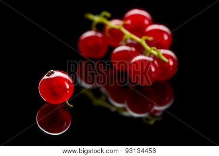 Bunch And One Berry Of Red Currant