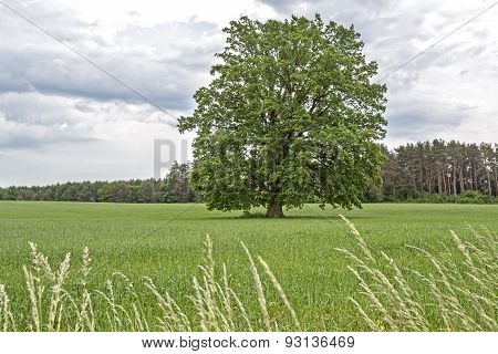 Rural landscape with a large tree in East Germany