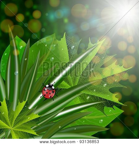 Green Leaves With Ladybug