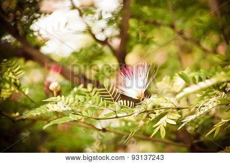 Tamarind flower background blurred