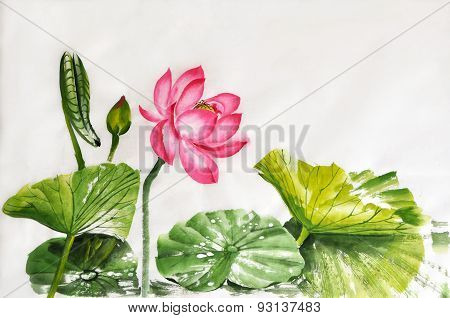 Lotus Flower Watercolor Painting