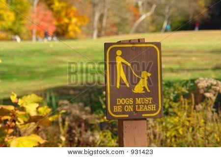 Walk Your Dog On Leash