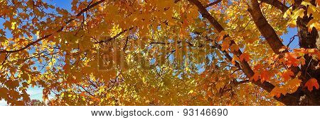 Autumn Leaves- 2014