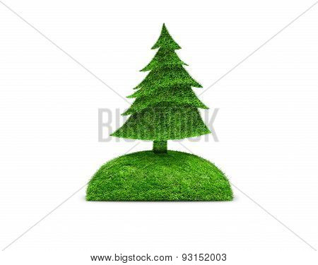 Green isolated fir tree