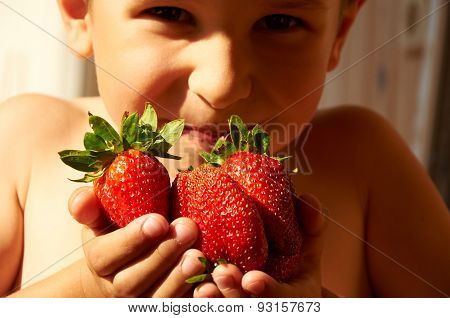Several Big Red Ripe Strawberries In Boy's Hands