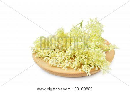 Elderflower Blossoms On White