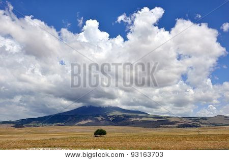 Field And Tree With Blue Sky Cloud