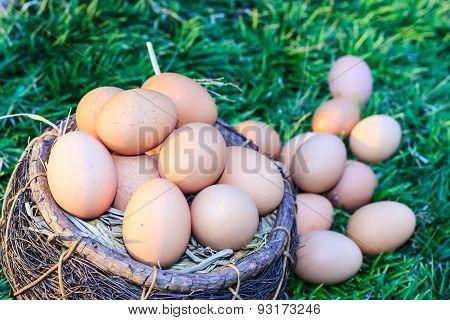 Easter Eggs In Nest On Green Grass Background.