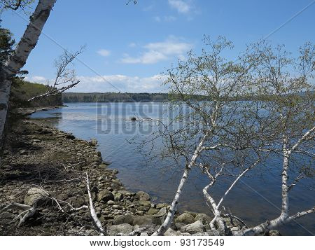 Penobscot River Tidal Basin in spring with rocky shore and birch trees