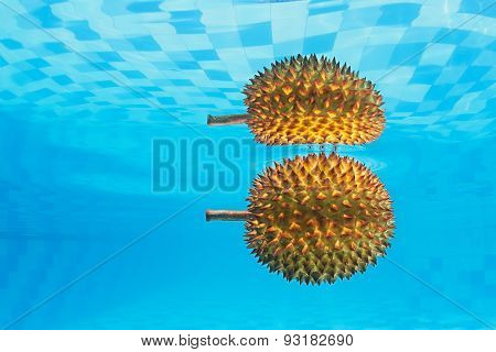Underwater background of exotic Asian spiny fruit durian
