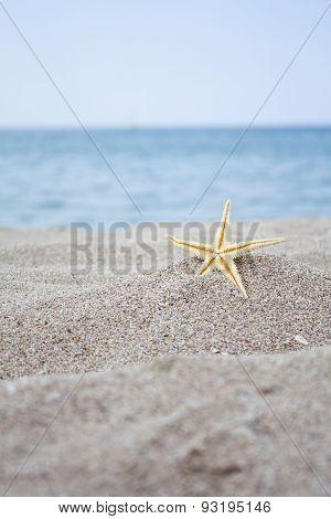 Seashells By The Sea