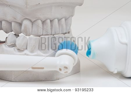 Dental mould on a white background