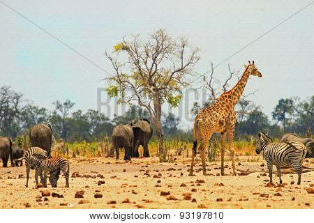 Giraffe, Elephant & Zebra around a vibrant waterhole