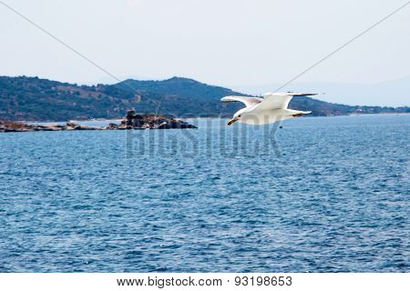 Fish Seagull Flying Low Over The Water Surface