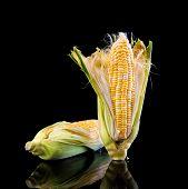 foto of sweet-corn  - sweet corn with shadow isolate on black - JPG