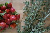 picture of oregano  - strawberries - JPG