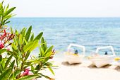 picture of oleander  - Pink oleander leafs blue sea and boats background - JPG