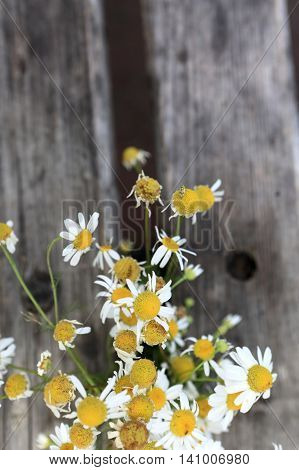 Details of chamomile on a wood background