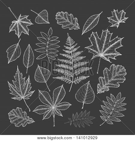 large set of white leaves of different trees on a dark background. Hand drawing. Vector illustration