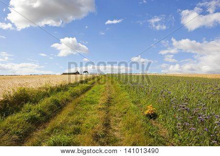 Barley Crop With Disused Farm