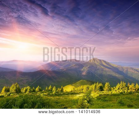 Wonderful sunrise in the mountains. Summer landscape with a fir forest and a beautiful top. Art processing of photos. Color toning. Collage of two frames