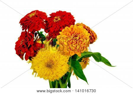 Isolated On White Background Sunflower Garden Flowers And Zinnia