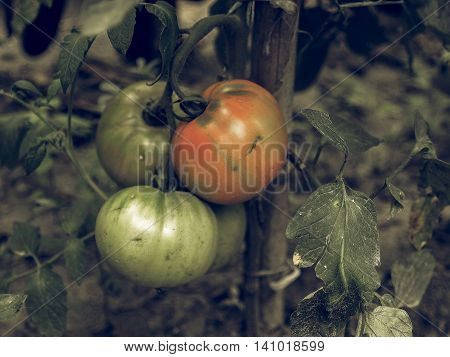 Tomato Vintage Desaturated