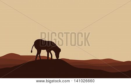Silhouettes of zebra in hills at the afternoon