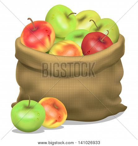 Illustration of a sack of apples on a white background. Vector icon