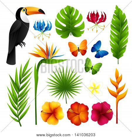 Tropical design elements. Palm leaves flowers toucan and butterflies.
