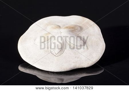 Sea shell of sea urchin isolated on white background .