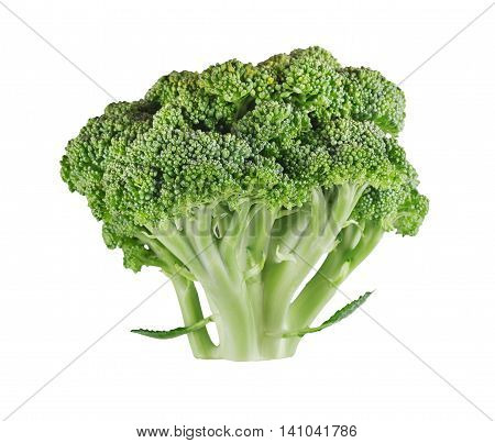 Studio shot of ripe broccoli tree with green leaves isolated on white background. Closeup of fresh organic vegetable food, diet concept