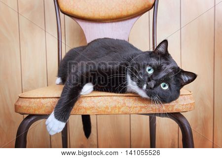 Black and White cat laying on a retro chair