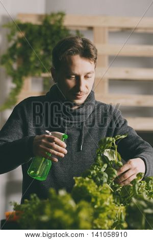 Handsome grower is carefully irrigating plants indoor.