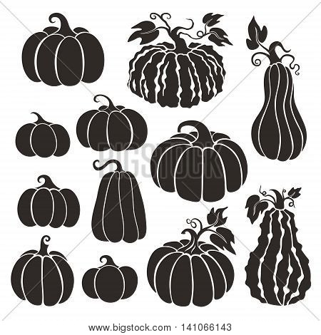 Pumpkins set. Collection of various type pumpkins