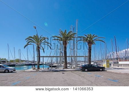 Palm Trees In Marina