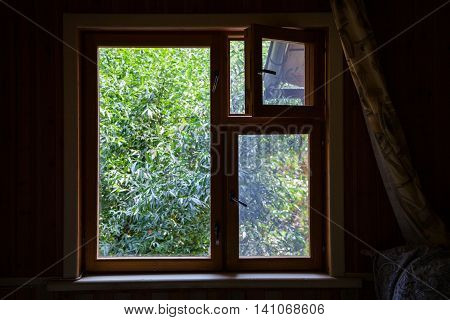 View From Country House Window On Green Tree