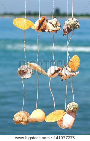 Craft Object With Rare Shells Hanging