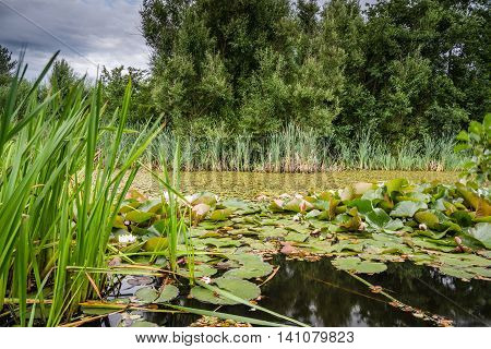 East Cramlington Lily Pond, in a local nature reserve in Northumberland, providing free and easy access to nature