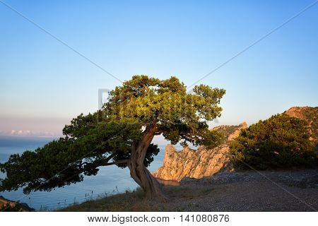 Beautiful landscape with pine sea and cliffs in Crimea illuminated by the sunrise sun