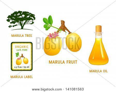 Marula fruit, tree, organic oil and cosmetics label