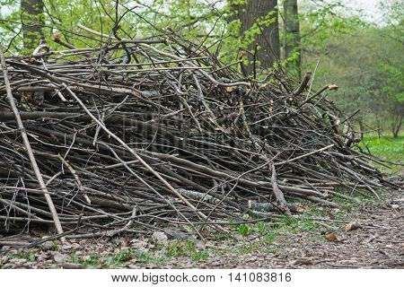Heap Of Firewood In Forest At Summer