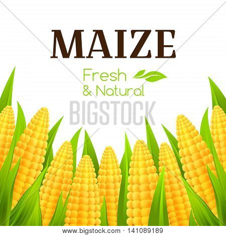 Sweet corn banner. Vector background with maize corbs. Decorative border for package design.