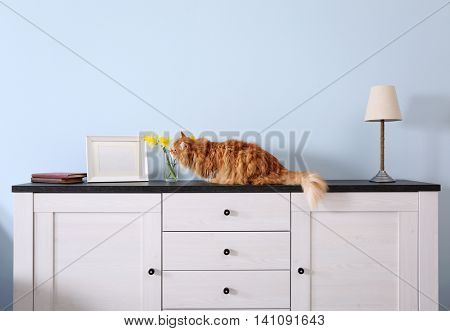 Cute ginger cat on chest of drawers