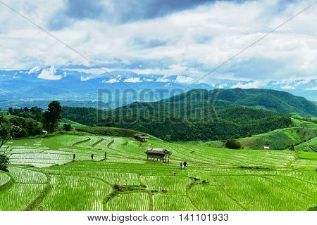 Terrace of Rice Field in valley agriculture from Northen Thailand Mae Cham district Chiangmai