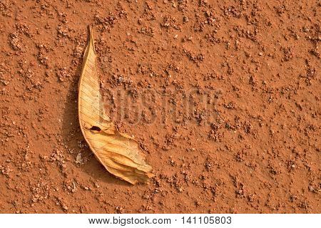 Dry Chestnut Leaf On Tennis Court. Dry Red Crushed Surface