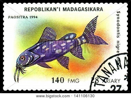 STAVROPOL RUSSIA - July 31 2016: a stamp printed by Malagasy Republic shows the fishes with the inscription Synodontis nigreventris series circa 1994