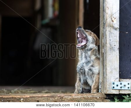 Funny little puppy yawns at summer day