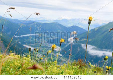 Flower At Mont Blanc