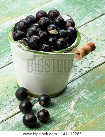 White Garden Bucket Full of Fresh Berries of Blackcurrant closeup on Cracked Wooden background